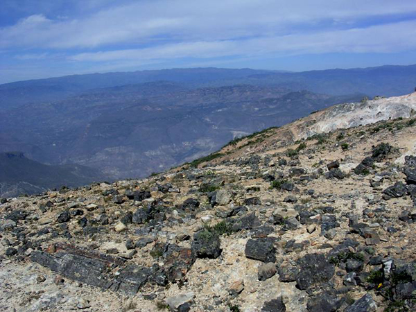 Photo of fossil logs at Piedra Chamana